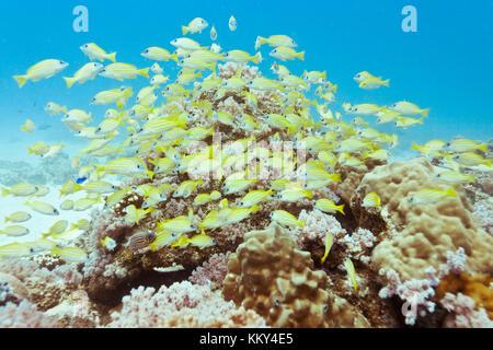 Mauritius - Afrika - Unterwasser Familie Stockbild