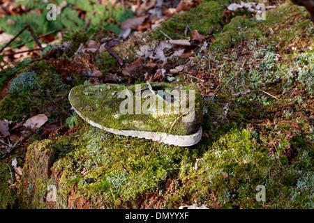 Moos wächst auf einem verlassenen Schuh. Stockbild