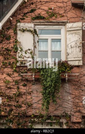 Altes Haus mit Efeu und weißen Fensterläden Stockbild