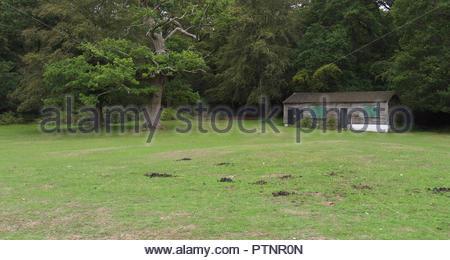 Schwan Grün Cricket Pavilion New Forest Hampshire England Großbritannien Stockbild