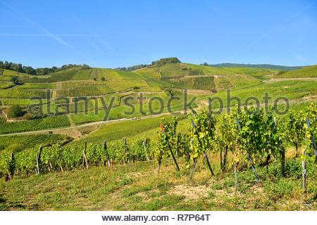 Frankreich, Haut Rhin, Turckheim, Elsass Wein Straße, Turckheim Weinberg Stockbild