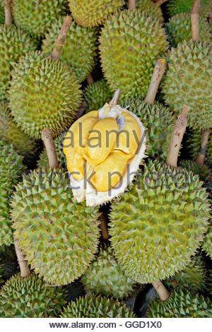 Botanik, Durian Frucht am Markt. Dieses stachelige Frucht ist eigenartig: einige Menschen buchstäblich nicht Stockbild