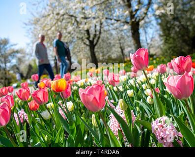 Berlin, Deutschland. 18 Apr, 2019. Besucher vorbei an blühenden Tulpen und Hyazinthen im Britzer Garten bei schönem Wetter. Credit: Monika Skolimowska/dpa-Zentralbild/dpa/Alamy leben Nachrichten Stockbild