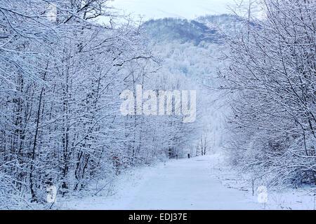 Winterwald Stockbild