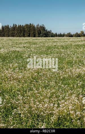 Grün und bunte Blume Bereich mit wenig Wald Stockbild