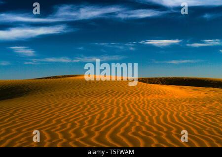 Wüste, Jaisalmer, Rajasthan, Indien, Asien Stockbild