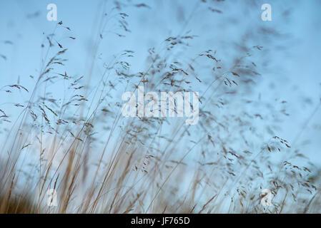 Pflanzen gegen Himmel Stockbild
