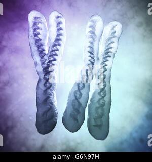 Chromosomen X und Y - Genetik-Abbildung Stockbild