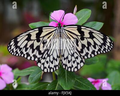 Schmetterling auf Blüte in Nahaufnahme im freien Stockbild