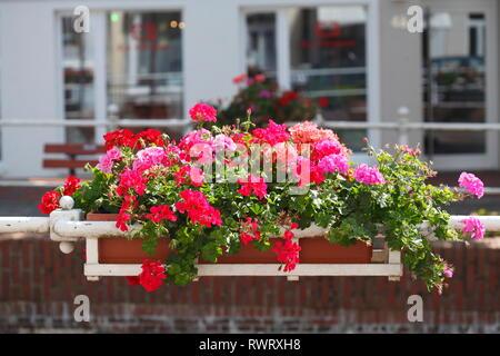 Blumenkasten mit roten Geranien an der Buxtehuder Fleth, Ostfleth, Buxtehude, Altes Land, Niedersachsen, Deutschland, Europa Stockbild