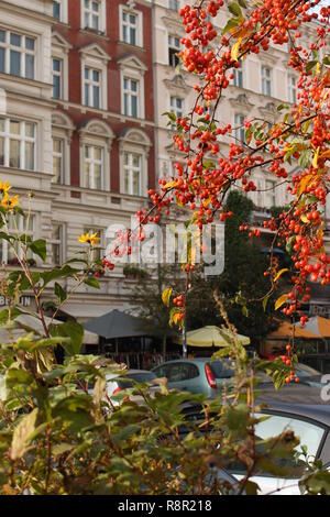 Berlin, Prenzlauerberg Häuser und Eberesche Baum, Herbst Stockbild
