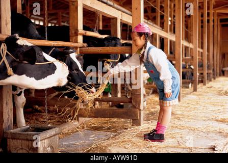 Mädchen, die eine Kuh füttern Stockbild