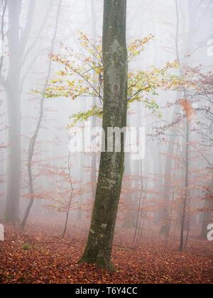 Herbst Wald Stockbild