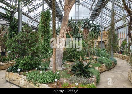 Berlin, Deutschland - der Botanische Garten Berlin-Dahlem. Afrikanische Sukkulenten in den wichtigsten tropischen Stockbild