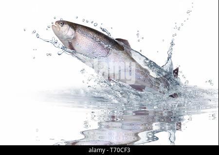 Fische 139 Stockbild