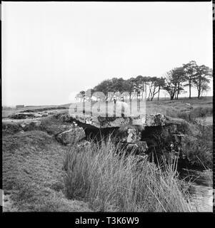 Pulver Mühlen Clapper Bridge, Dartmoor, Devon, 1967. Ein Schaf stehend auf der Brücke über Cherry Brook auf dem Gelände der ehemaligen Schießpulver funktioniert. Stockbild