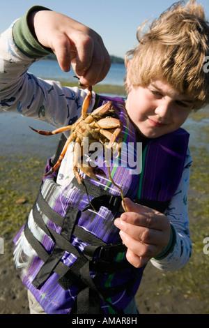 Ein kleiner Junge hält eine Krabbe am Strand Stockbild