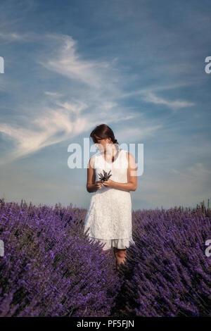 Ein Mädchen in einem weißen Kleid in einem Lavendelfeld in der Provence, Frankreich Stockbild