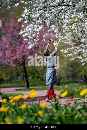 Berlin, Deutschland. 18 Apr, 2019. Ein Besucher nimmt ein Foto von einer blühenden Kirschbaum in Britzer Garten bei schönem Wetter. Credit: Monika Skolimowska/dpa-Zentralbild/dpa/Alamy leben Nachrichten Stockbild