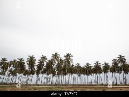 Palmen entlang der Küstenlinie, Sud-Comoé, Grand-Bassam, Elfenbeinküste Stockbild