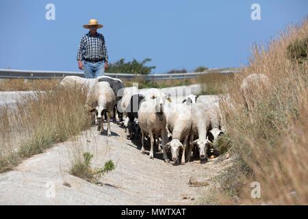 Schäfer mit Herde von Ziegen entlang der Landstraße, Sifnos, Kykladen, Ägäis, griechische Inseln, Griechenland, Europa Stockbild