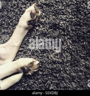 Hund-Rute und den Pfoten Stockbild