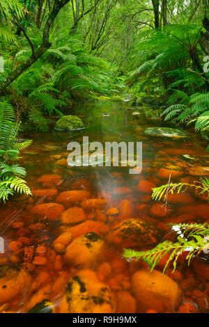 Red River durch üppigen Regenwald in der Garden Route National Park in Südafrika. Stockbild