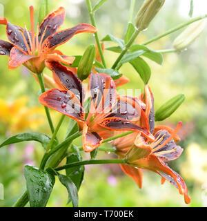 Blumen 625 Stockbild