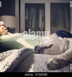 Mensch und Hund im Bett im Sonnenlicht Stockbild