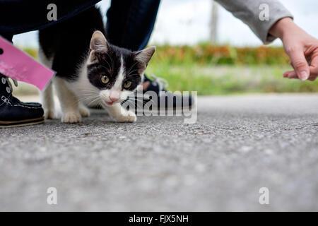 Porträt von Katze auf Street mit Frau Stockbild