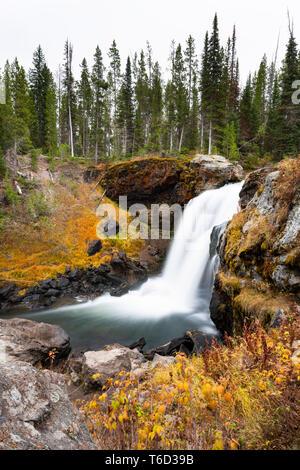 Elche fällt, Langusten Creek, Yellowstone National Park, Wyoming, USA Stockbild