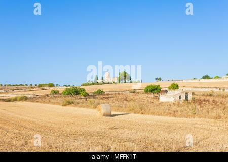 Santa Margalida, Mallorca, Balearen, Spanien - Heu Ertrag auf den Feldern von Mallorca Stockbild