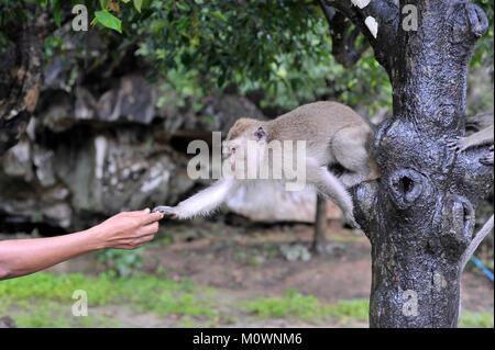 Mann Fütterung Monkey Stockbild