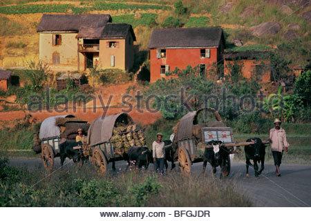 Ochsenkarren mit Holzkohle zur Hauptstadt, Madagaskar Stockbild