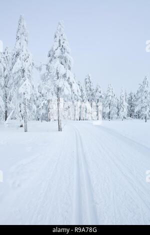 Eine Langlaufloipe durch eine gefrorene Landschaft in der Nähe von Trysil in Norwegen. Stockbild