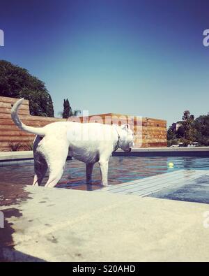 Hund in der Hauptrolle am Tennis ball im Schwimmbad. Stockbild