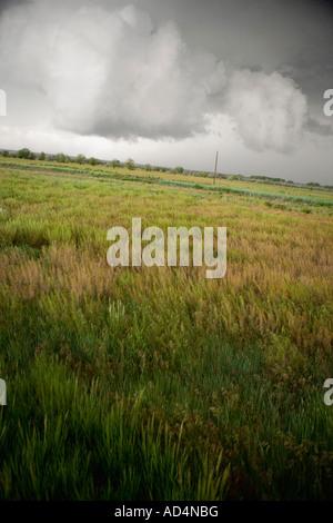 Gewitterwolken über einem Feld Stockbild