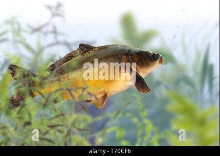 Fische 13. Stockbild
