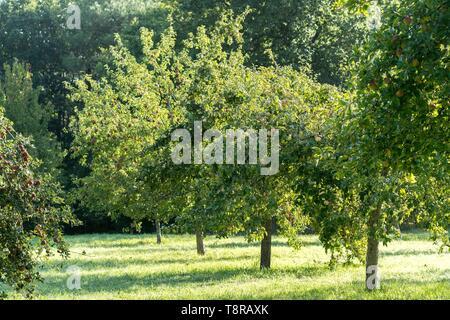 Frankreich, Morbihan, Brech, der Wintergarten Obstgarten Der ecomusee von St-Dégan Stockbild