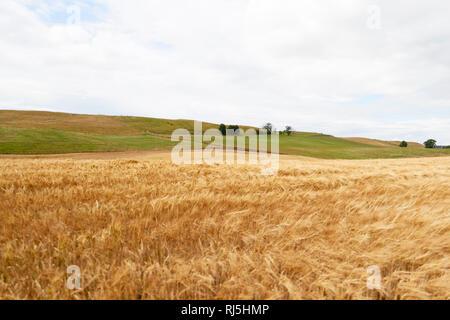 Ländliche Landschaft an bewölkten Tag Stockbild