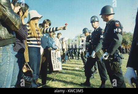 Weibliche Demonstrator bietet eine Blume zu militärischen Polizei während der 1967 Marsch auf das Pentagon. Stockbild
