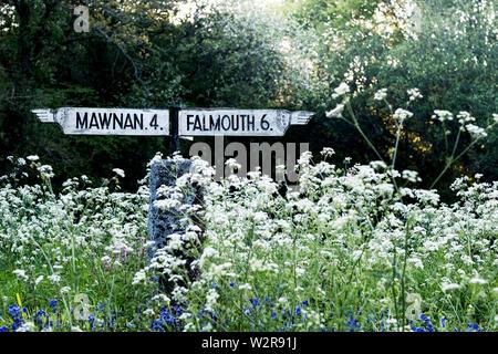 Traditionelle weiße Wegweiser Mawnan und Falmouth in Cornwall, die von Weißen und Blauen Wildblumen umgeben. Stockbild