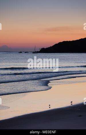 Malerischer Blick auf Surfen am Strand mit zwei Strandläufer bei Byron Bay in New South Wales, Australien Stockbild
