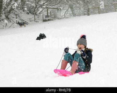 """Box, Wiltshire, UK. 1. Feb. Mädchen hinunter rodeln die schneebedeckten Hänge der """"Gemeinsamen in fallenden Schnee. Credit: Nick Upton/Alamy Leben Nachrichten. Stockbild"""