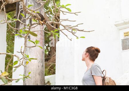 Maduganga See, Balapitiya, Sri Lanka - eine junge Frau an einem indischen Riese Eichhörnchen suchen Stockbild