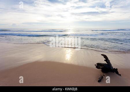 Asien - Sri Lanka - induruwa - wo die Natur noch sehr schön und beruhigend Stockbild
