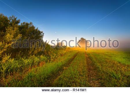 Malerischer Blick auf einem Feld bei Sonnenuntergang Stockbild