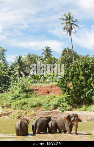 Tierwelt - Sri Lanka, Asien Stockbild