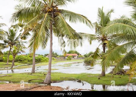 Palmen, Kakativu Kalpitiya, Sri Lanka, Asien Stockbild