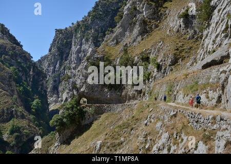Wanderer auf dem Cares Schlucht, mit einigen Durchlaufen einer Ausgegrabenen rock Tunnel, Picos de Europa Berge, Asturien, Spanien, August 2016. Stockbild